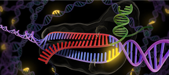 Graphic of CRISPR/Cas 9, a gene-editing technique that can target and modify DNA.