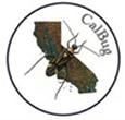 Calbug