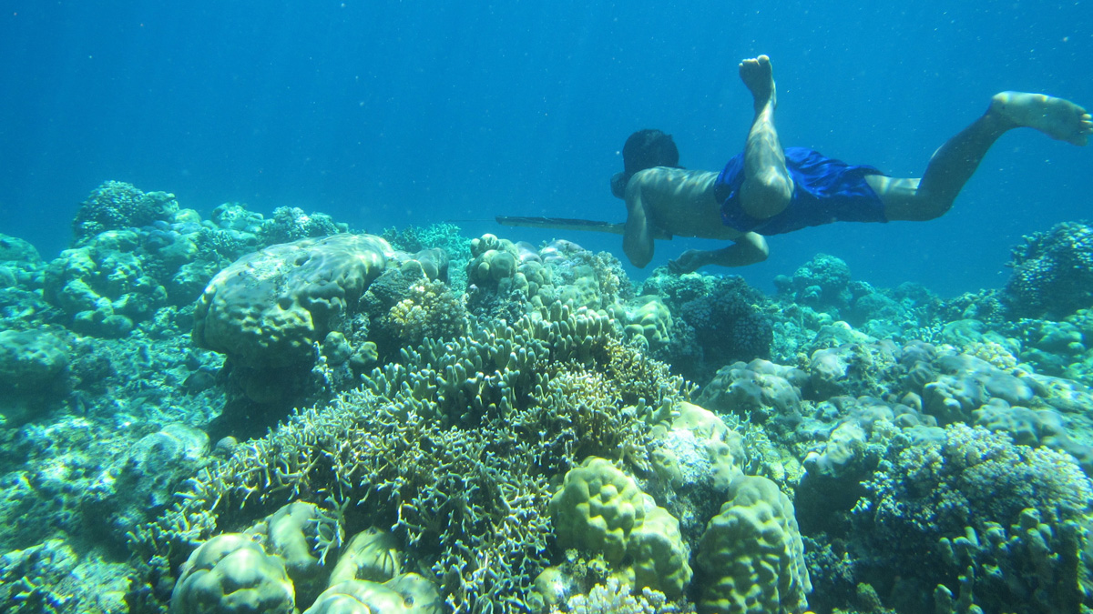 Snorkeler surrounded by coral