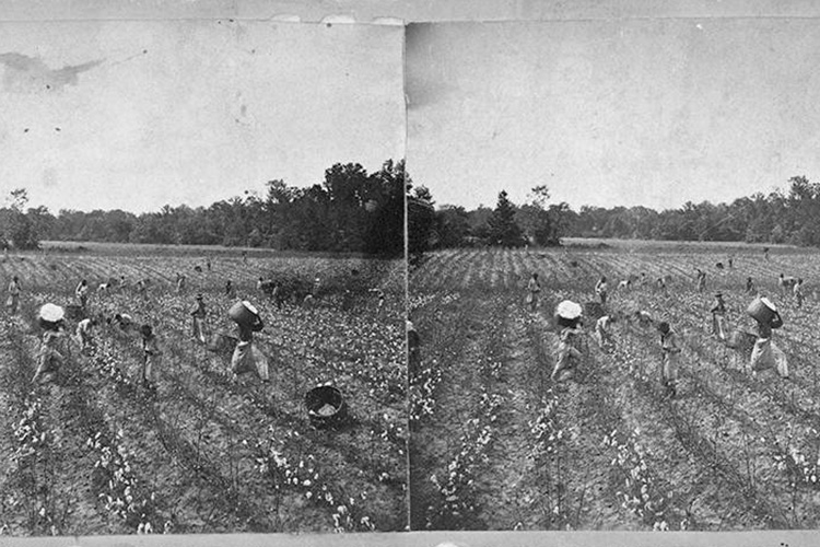 a photo of slaves working in a field