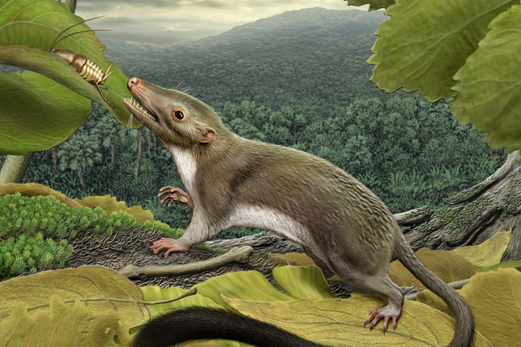 Artistic reconstruction of an ancestral placental mammal living during the Age of Dinosaurs.