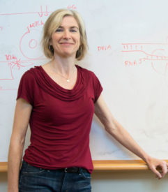 Berkeley scientist and CRISPR pioneer Jennifer Doudna is a member of the Biohub's Science Advisory Group. (UC Berkeley photo by Cailey Cotner)
