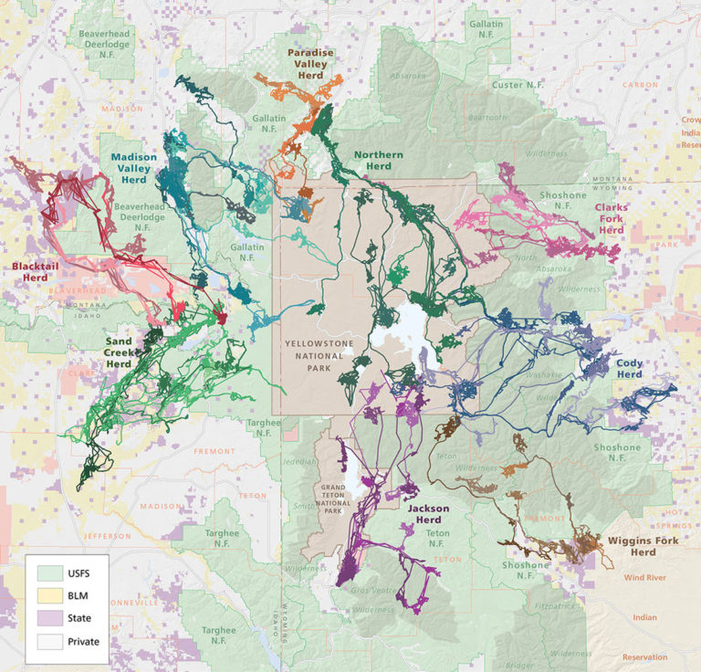 A map of the migratory routes of the nine major elk populations of the Greater Yellowstone ecosystem