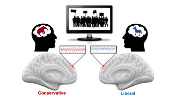 "A graphic shows differences in brain activity in the dorsomedial prefrontal cortex between liberals and conservatives. The brain on the left is says ""conservatives"" in red and the brain on the right says ""liberal"" in blue. A computer screen in the middle shows outlines of people holding banners."