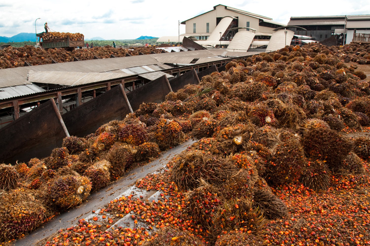A palm oil processing plant in Pasoh, Malaysian peninsula. (Matthew Luskin photo)