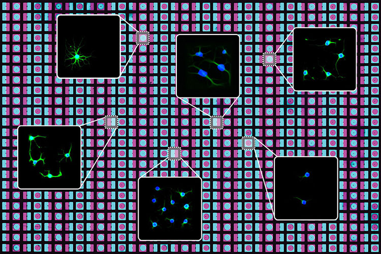 Squares showing individual cells are highlighted against a background of blue and purple squares