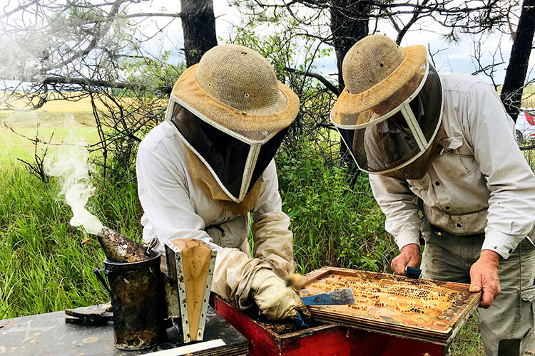 two people tend to a bee hive