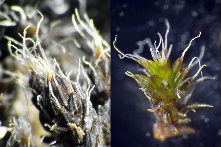 comparison of dry and wet moss