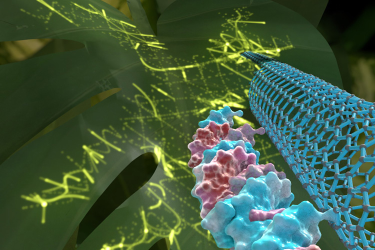 graphic showing DNA, nanotube and leaf