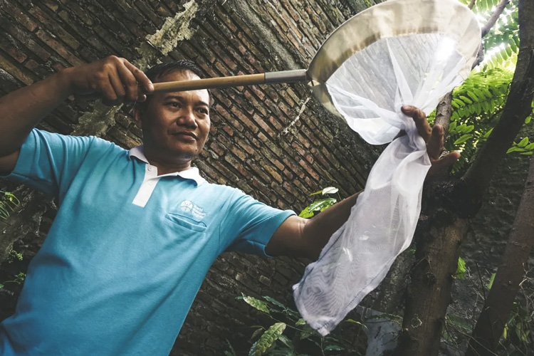 an Indonesian man with a mosquito net catching mosquitoes