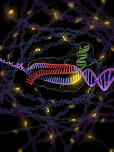 "Short DNA sequences known as ""PAM"" (shown in yellow) enable the bacterial enzyme Cas9 to identify and degrade foreign DNA, as well as induce site-specific genetic changes in animal and plant cells. The presence of PAM is also required to activate the Cas9 enzyme. Illustration: KC Roeyer."