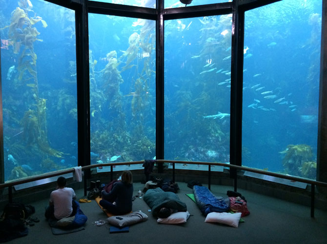 Fishackathon participants got to sleep over at the Monterey Bay Aquarium, which one School of Information competitor said could make future hackathons seem tame by comparison. Photo: Isha Dandavate