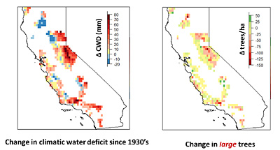 Severe water stress (left red) since the 1930s mirrors the decline of large trees (right red) seen throughout the state, from the Sierra Nevada to the Coast Ranges.