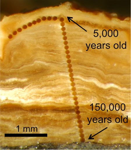 Magnified photograph of a cross-section through a 3 mm-thick pedothem soil deposit from Wyoming. The line of dots are laser ablation sampling spots that are 0.1 mm in diameter. The innermost mineral material is about 150,000 years old, and becomes progressively younger towards the outside. (Photo by Erik Oerter)