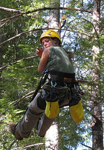 Daniella Rempe collecting Douglas fir samples in the tree canopy at Angelo reserve to measure the stable isotope concentration, which is used to identify the source of the water the tree is using. Photo: William Dietrich
