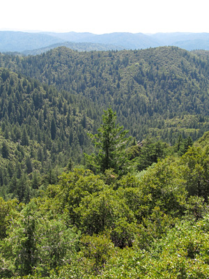 This forested, soil-mantled landscape near the Eel River Critical Zone Observatory is typical of the Northern California coast range. Photo: Danielle Rempe
