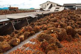 A palm oil processing plant in Pasoh, Malaysian peninsula.