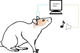 Illustration of rat generating visual feedback to a computer