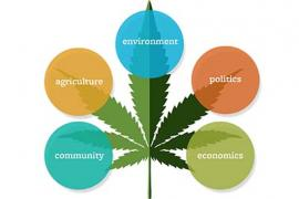 A graphic of a marijuana leaf with 5 colored circles surrounding it displaying the words: Community, Agriculture, Environment, Politics, and Economics
