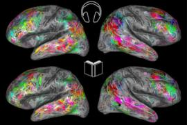 Color coded maps of the brain