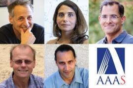 new AAAS fellows