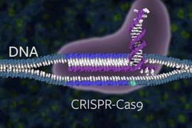 CRISPR-Cas9 graphic
