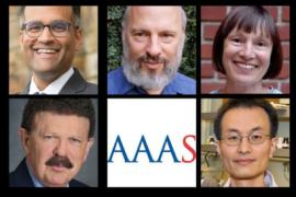 Sanjay Gupta (top left), Spencer Klein, Margaret Conkey, Robert Ritchie (bottom left) and Peidong Yang are the five new Berkeley scholars elected to the American Association for the Advancement of Science.