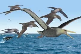 depiction of 50 million-year-old pelagornithid bird with ancient albatrosses and penguins