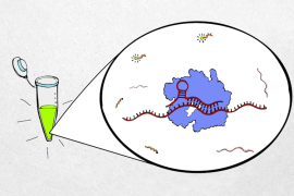 An illustration shows a green sample in a vial. Next to it is a bubble which shows a close up of the CRISPR Cas13 protein and how it interacts with viral RNA.