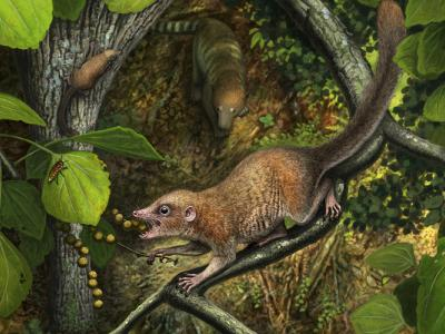artistic rendering of extinct primate ancestor in trees