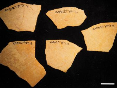 fragments of 120,000-year-old ostrich eggshells
